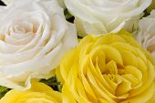 Close up bouquet of yellow and cream roses