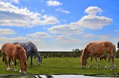 stock photo of feeding horse  - Herd of horses grazing on a spring meadow - JPG