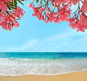 foto of oleander  - some red oleanders over a golden beach - JPG