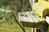 stock photo of swarm  - Swarm of bees in front of a bee - JPG