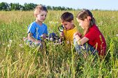Three kids looking to flower with a magnifyer