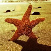 a seastar in the shore of the sea with a retro effect