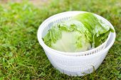 foto of iceberg lettuce  - Salad spinner with iceberg and red lettuce diet concept - JPG