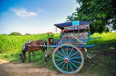 The horse carriage in Bagan, Myanmar