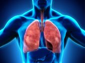 stock photo of respiration  - Illustration of Human Respiratory System - JPG