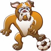 Strong bulldog preparing to free kick a soccer ball