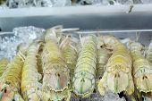 Fresh Mantis Shrimp On Ice