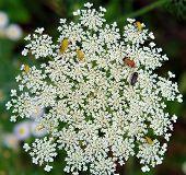 Beetles On Flowers