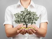 Female hands holding money tree and gold coins