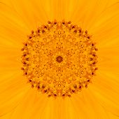 Yellow Mandala Flower. Concentric Kalaidoscope Design
