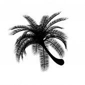 Black on white palmtree palm tree