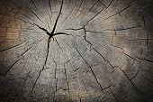 Texture of slice of wood timber. Natural background