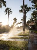 Watering Lawn At Dawn Street