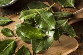 Green Organic Bay Leaves