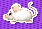illustration of a close up mouse