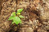 New Leaves Born On Old Tree