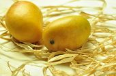 picture of rip  - Ripped Indian mangoes placed on a dry grass - JPG