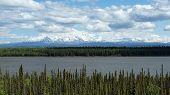 foto of willow  - The Wrangell mountains rise above Alaska - JPG