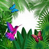 foto of colibri  - Tropical leaves with birds - JPG