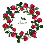 image of red clover  - Vector floral frame with clover red flowers - JPG