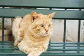 foto of tigers-eye  - Tiger colored green eyes cat sitting on a green bench - JPG