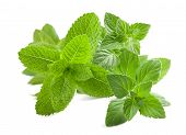 stock photo of nepeta  - Fresh mint isolated on a white background - JPG