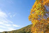 image of chestnut horse  - Autumn Horse chestnut leaves in front of hill under blue sky - JPG