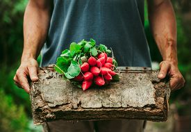 image of radish  - Organic vegetables - JPG