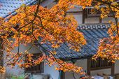 Autumn Foliage With Roof House Background In Korankei, Aichi, Japan poster