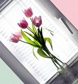 Bouquet Tulip In Glass Vase Beside Window