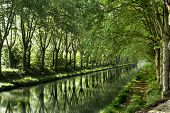 Poplar trees along the canal in France, planted long ago to keep the horses cool that had to pull th