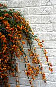 Pretty Flowers And White Brick Wall