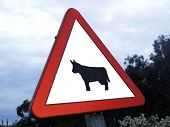bright cow sign in the spanish country