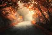 Amazing Autumn Forest With Rural Road In Fog. Fall Trees With Orange Foliage. Landscape With Woods,  poster