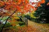 Scenic view of misty autumn landscape with beautiful old bridge in the garden with red maple foliage poster