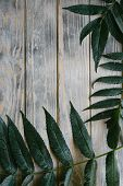 Green Leaves Of A Tree Branch On Distressed Rough Grey Wooden Background. Flora Nature And Botany. F poster