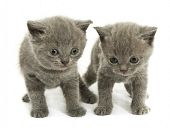 Two small funny kittens. Isolated on white background