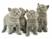 foto of funny animals  - Four small funny kittens - JPG