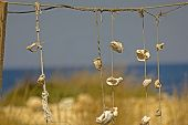 Sea Shells In The Form Of Scenery. Decoration On The Beach For Tourists In The Form Of Sea Shells. D poster