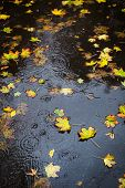 Autumn Rain. Some Yellow Leaves In The Puddle poster