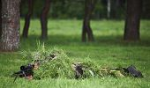 Camouflaged sniper in the field