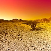 Raging Colors Of The Rocky Hills Of The Negev Desert In Israel. Breathtaking Landscape And Nature Of poster