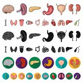 Human Organs Cartoon Icons In Set Collection For Design. Anatomy And Internal Organs Vector Symbol S poster
