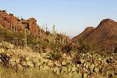 Desert Pass With Cactus