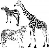 African striped and spotty animals