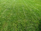 image of manicured lawn  - Photo recently manicured green lawn in the afternoon - JPG