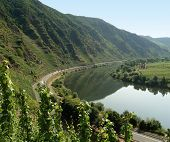 picture of moselle  - high angle view including vine plants at river Moselle in Germany - JPG