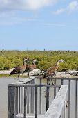 Birds At Bittern Pond, Little Cayman, Cayman Islands, Caribbean
