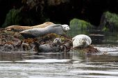 Harbor Seals Backing In The Sun