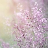 Background of beautiful lavender color flower field, fresh gentle purple wildflowers in sunny day, s